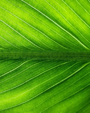 Mode & Plantes